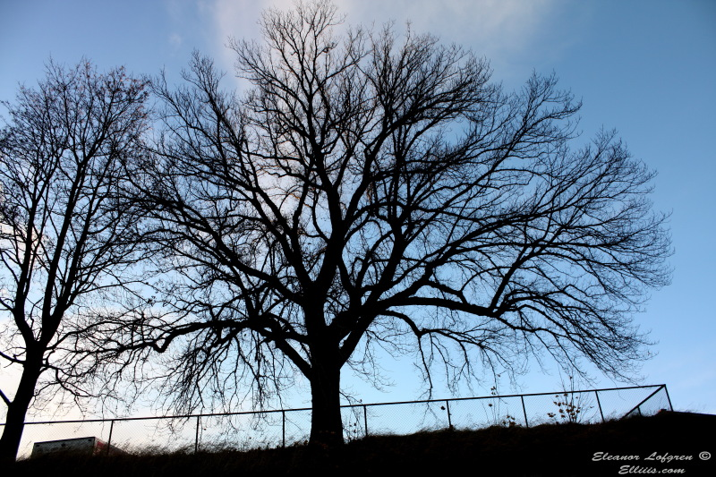 Nice autumn tree